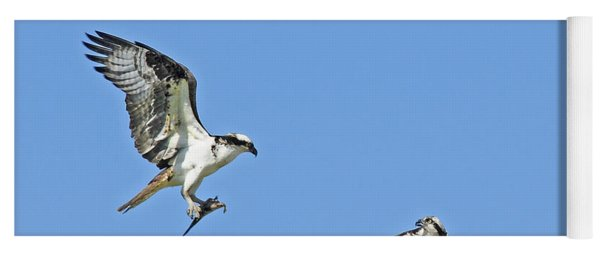 Osprey Brings Fish To Nest Yoga Mat