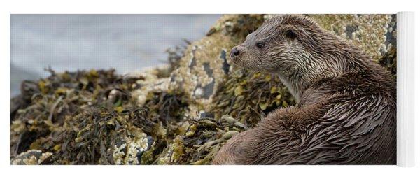 Otter Relaxing On Rocks Yoga Mat