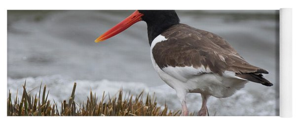 Oyster Catcher Yoga Mat