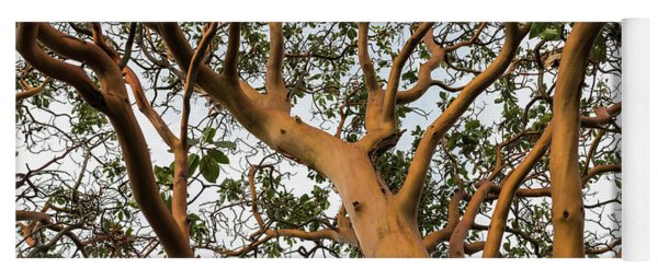 Pacific Madrone Trees Yoga Mat