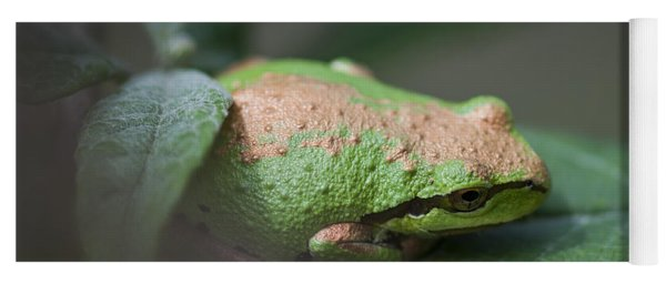 Yoga Mat featuring the photograph Pacific Treefrog Siesta by Robert Potts
