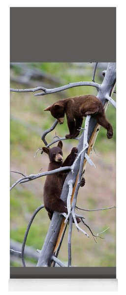Pair Of Bear Cubs In A Tree Yoga Mat