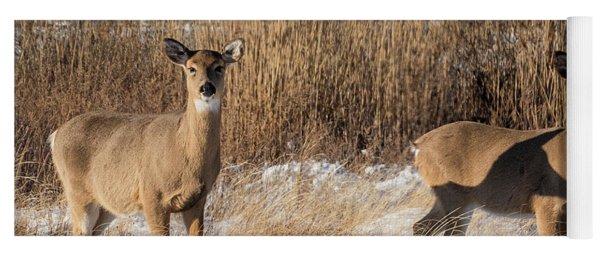 Pair Of White Tailed Deer Yoga Mat