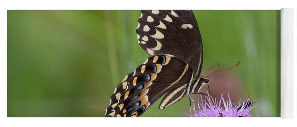 Palamedes Swallowtail And Friends Yoga Mat