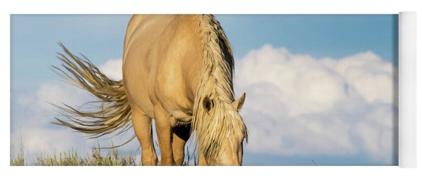 Yoga Mat featuring the photograph Palomino Wild Stallion In The Evening Light by Nadja Rider