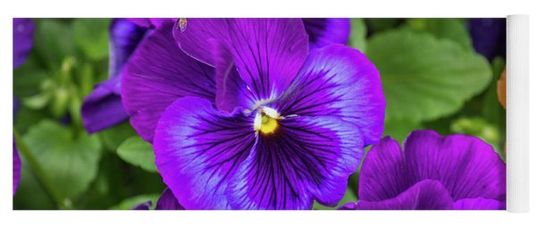 Pansies In Purple And Blue Yoga Mat