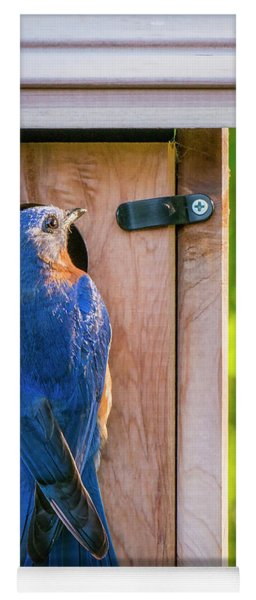 Papa Bluebird At The Nest Box Yoga Mat