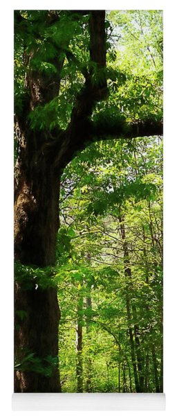 Paris Mountain State Park South Carolina Yoga Mat