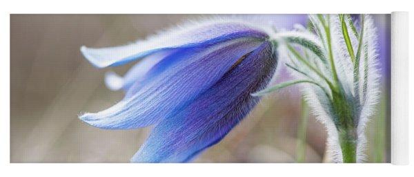 Pasque Flower's Silver Grey Hair Yoga Mat