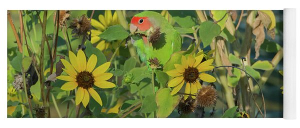 Peach-faced Lovebird 5890-092517-1 Yoga Mat