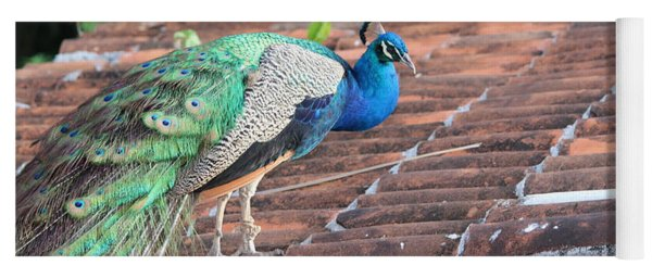 Peacock On Rooftop Yoga Mat
