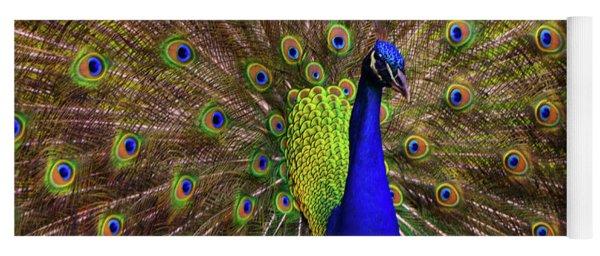 Peacock Showing Breeding Plumage In Jupiter, Florida Yoga Mat