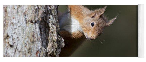 Yoga Mat featuring the photograph Peekaboo - Red Squirrel #29 by Karen Van Der Zijden