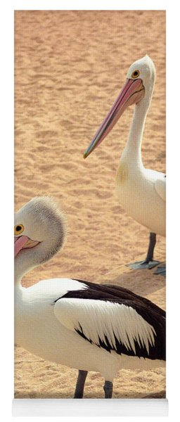 Yoga Mat featuring the photograph Pelicans Seriously Chillin' by T Brian Jones