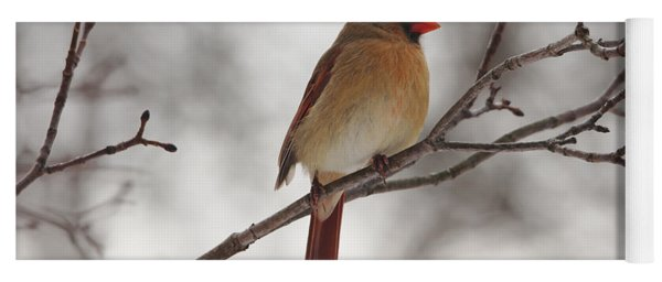Perched Female Red Cardinal Yoga Mat