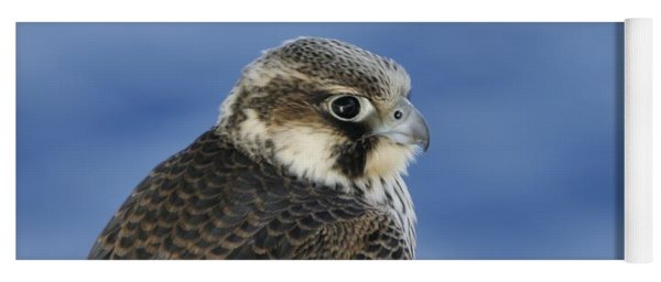 Peregrine Falcon Juvenile Close Up Yoga Mat