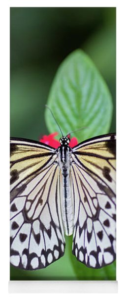 Yoga Mat featuring the photograph Perfect Butterfly Pose by Raphael Lopez