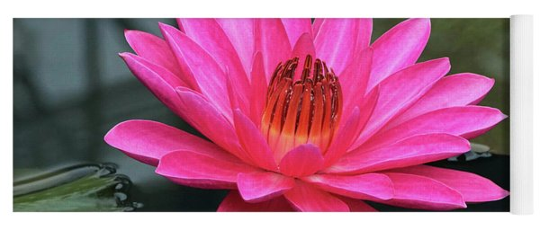 Perfect Pink Petals Of A Waterlily Yoga Mat