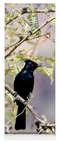 Phainopepla Black Cardinal Yoga Mat