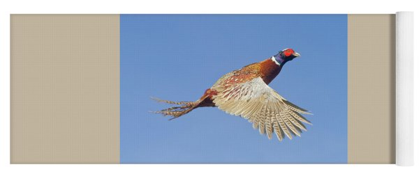 Pheasant Wings Yoga Mat
