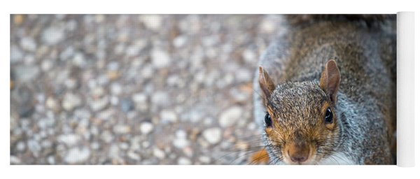 Photo Of Squirel Looking Up From The Ground Yoga Mat