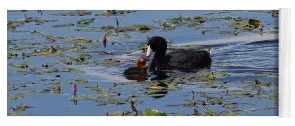Pied Billed Grebe Lake John Swa Co Yoga Mat