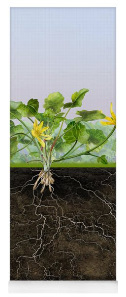 Pilewort Or Lesser Celandine Ranunculus Ficaria - Root System -  Yoga Mat