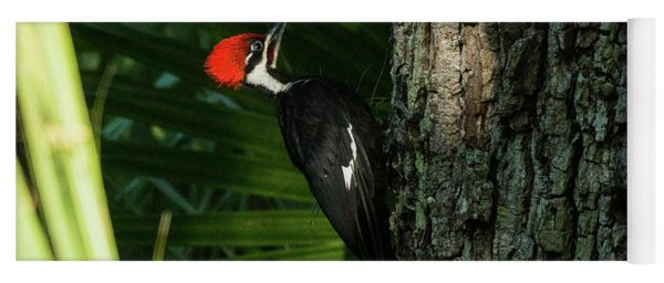 Piliated Woodpecker Blue Spring State Park Florida Yoga Mat