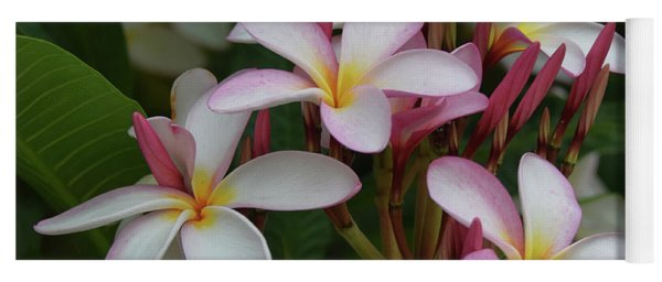 Yoga Mat featuring the photograph Pink And White Plumeria by Pamela Walton