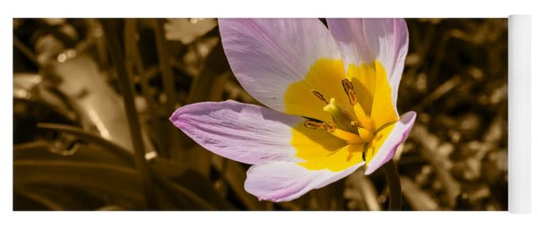 Pink And Yellow Tulip On Sepia Background Yoga Mat