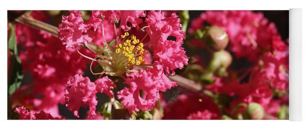 Yoga Mat featuring the photograph Pink Crepe Myrtle Flowers by Debi Dalio