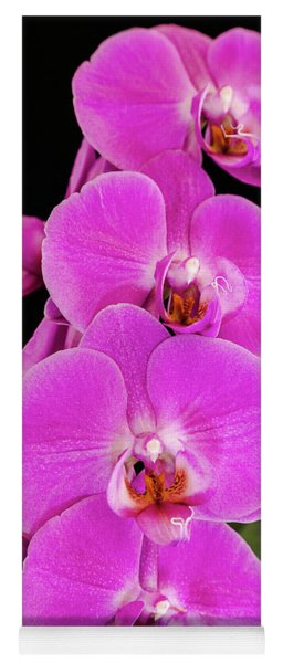 Pink Orchid Against A Black Background Yoga Mat