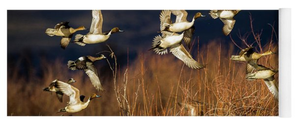 Pintails And Wigeons Yoga Mat