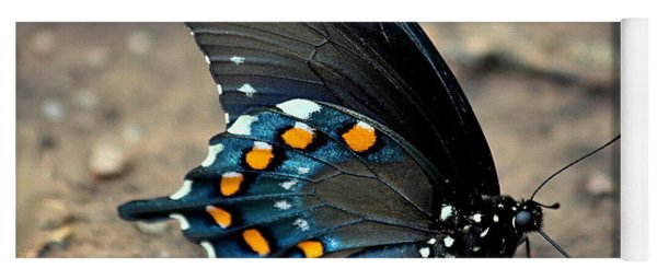 Pipevine Swallowtail Close-up Yoga Mat