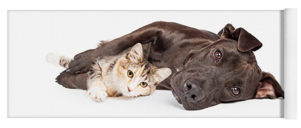 Pit Bull Dog And Kitten Cuddling Yoga Mat