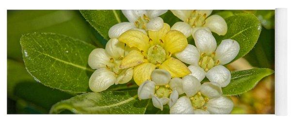 Pittosporum Flowers Yoga Mat