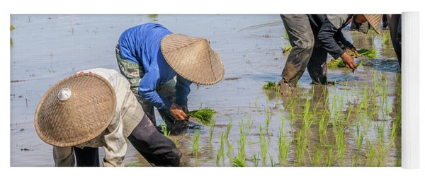 Planting Rice Seedlings Yoga Mat