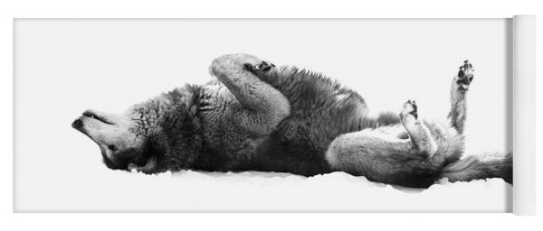 Playful Gray Wolf Photo Yoga Mat
