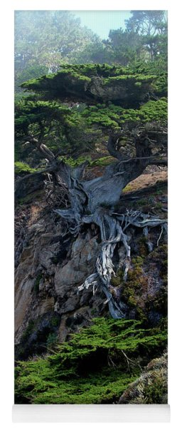 Point Lobos Veteran Cypress Tree Yoga Mat