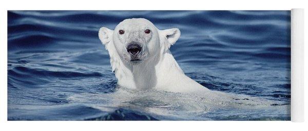 Yoga Mat featuring the photograph Polar Bear Swimming Baffin Island Canada by Flip Nicklin