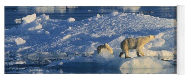 Yoga Mat featuring the photograph Polar Bear And Cubs On Ice by Rinie Van Meurs