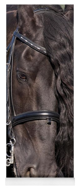Portrait Of A Friesian Yoga Mat