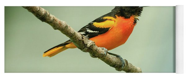 Portrait Of A Singing Baltimore Oriole Yoga Mat