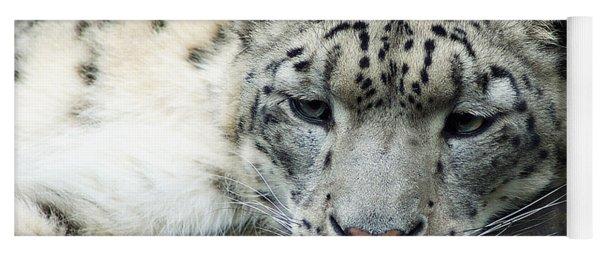 Portrait Of A Snow Leopard Yoga Mat