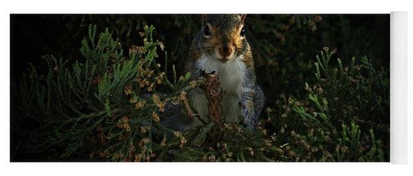 Portrait Of A Squirrel Yoga Mat