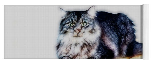 Portrait Of Maine Coon, Mattie Yoga Mat