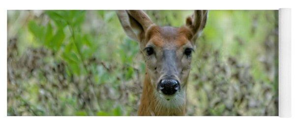 Portriat Of Male Deer Yoga Mat