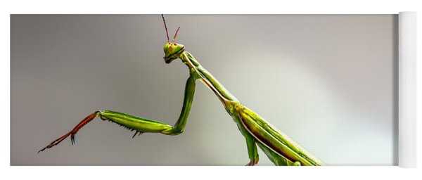Praying Mantis  Yoga Mat
