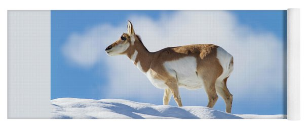 Pronghorn Doe On Snowy Ridge Yoga Mat