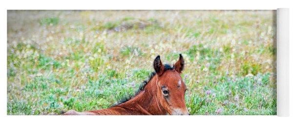 Yoga Mat featuring the photograph Pryor Mountaina Foal by Gary Beeler